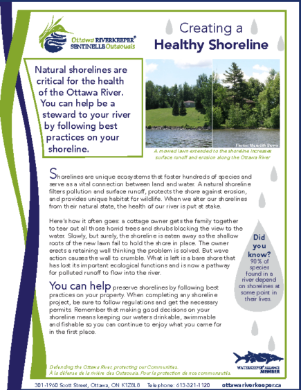 Creating a Healthy Shoreline