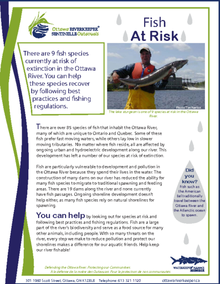 Fish at Risk