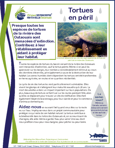 Tortues en peril